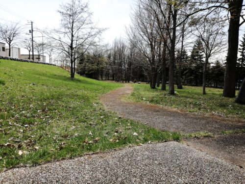 林の広場の林道