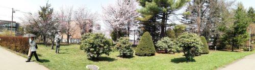 複数ヶ所に桜が木が植えられています