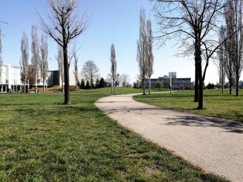 芝広場に設けられた園道。