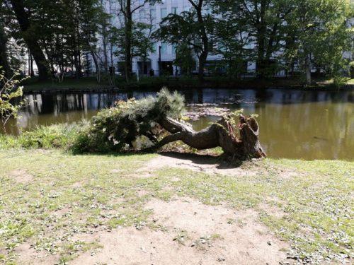 強風により倒れた樹木