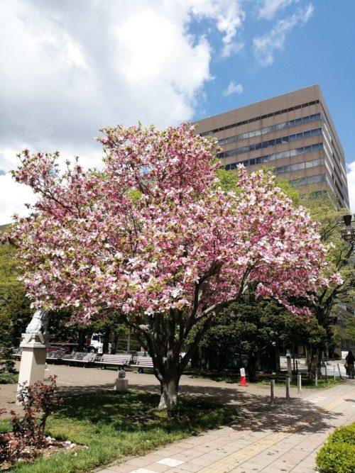 その他にも複数の植物が植えられ、キレイな花を咲かせています。
