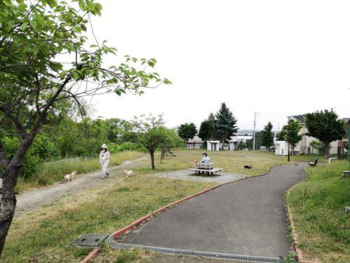 舗装された平坦な園道