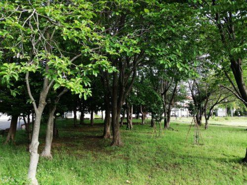 樹木エリア全体