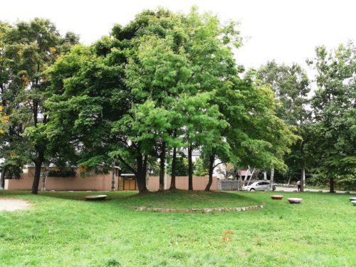 木陰スペース