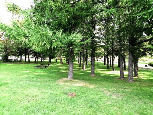 樹林スペース