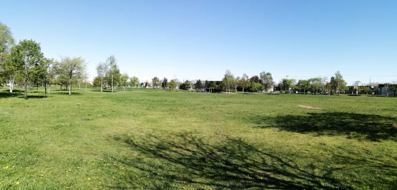 多目的芝広場