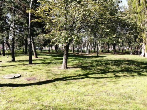 多目的広場(桜の森)